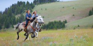 Прогулки на лошадях в Харькове
