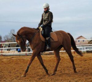 Прокат лошадей в Харькове