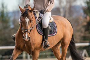 Сколько стоит покататься на лошади в Харькове