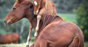Как выбрать кличку лошади