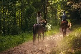 Конные прогулки в Харькове