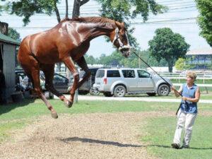 страхи лошади
