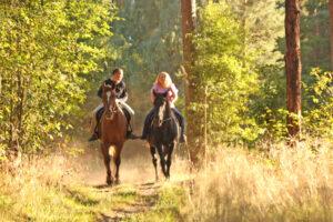 прогулки с лошадью