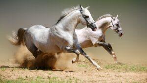 Основы движения лошади - аллюры
