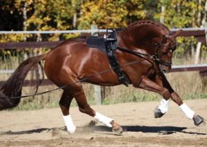 Работа с лошадью на земле