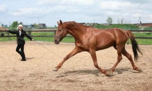 Работа с лошадью