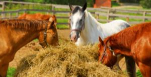 еде для лошадей