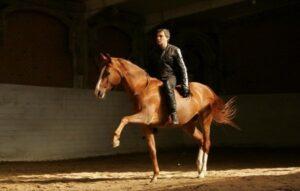 шаг лошади