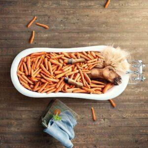 Морковь для лошади