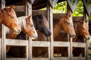 Основы ухода и содержания лошадей в Харькове