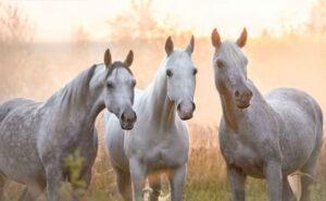 факты о лошадях