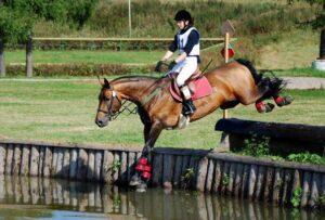 Кроссы лошадей