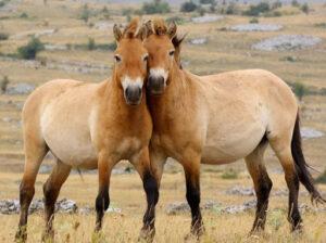 продолжительность жизни у лошадей