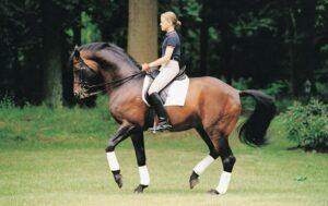 обучение лошади