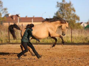 Как успокоить лошадь