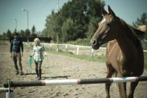 лошадь плохо учится